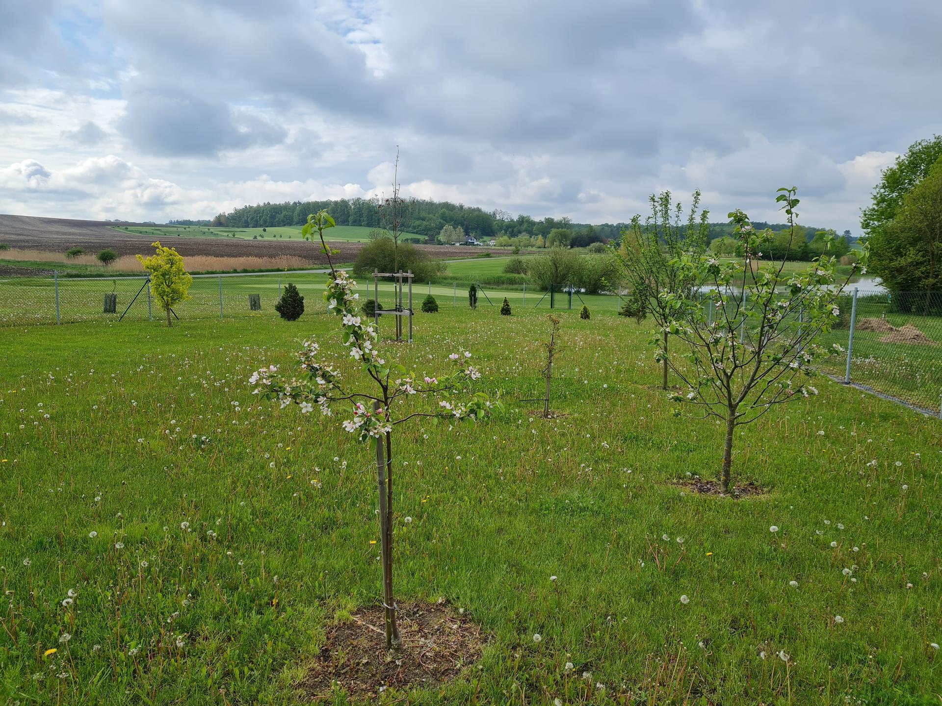 Zahrada 2021 - Obrázek č. 8