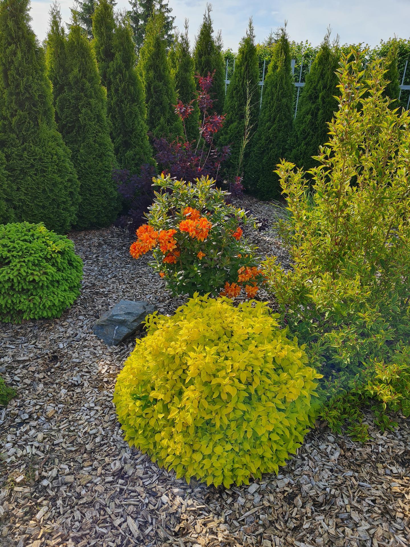 Zahrada 2021 - Obrázek č. 12