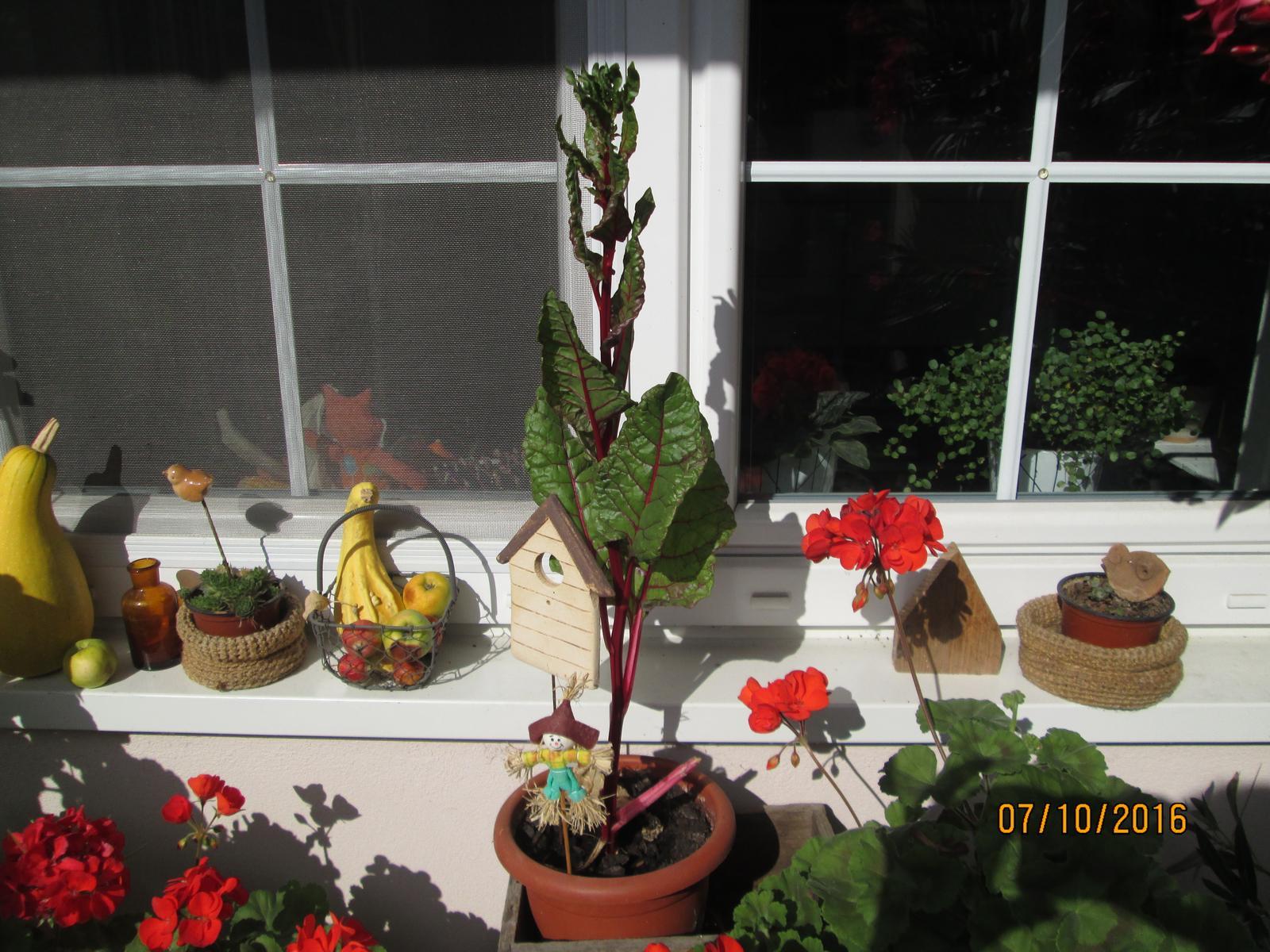 Moje zahrada - Obrázek č. 226