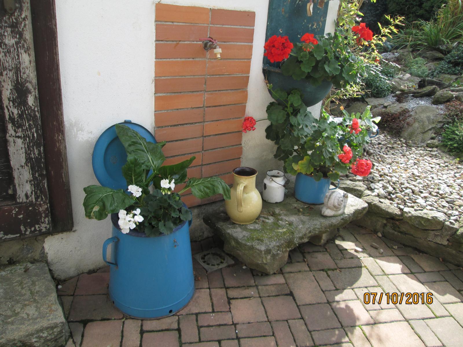 Moje zahrada - Obrázek č. 228