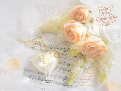 16.7.2005 - Tak v této barvě květů by naše dekorace neměly chybu. Teď ji ještě sehnat :-)