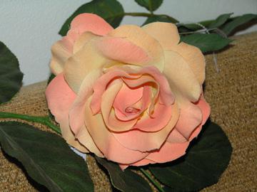 16.7.2005 - A jenom květ