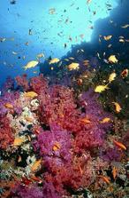 A svatební cesta do Egypta jupí,šnorchlováni v Rudém moři je zážitek