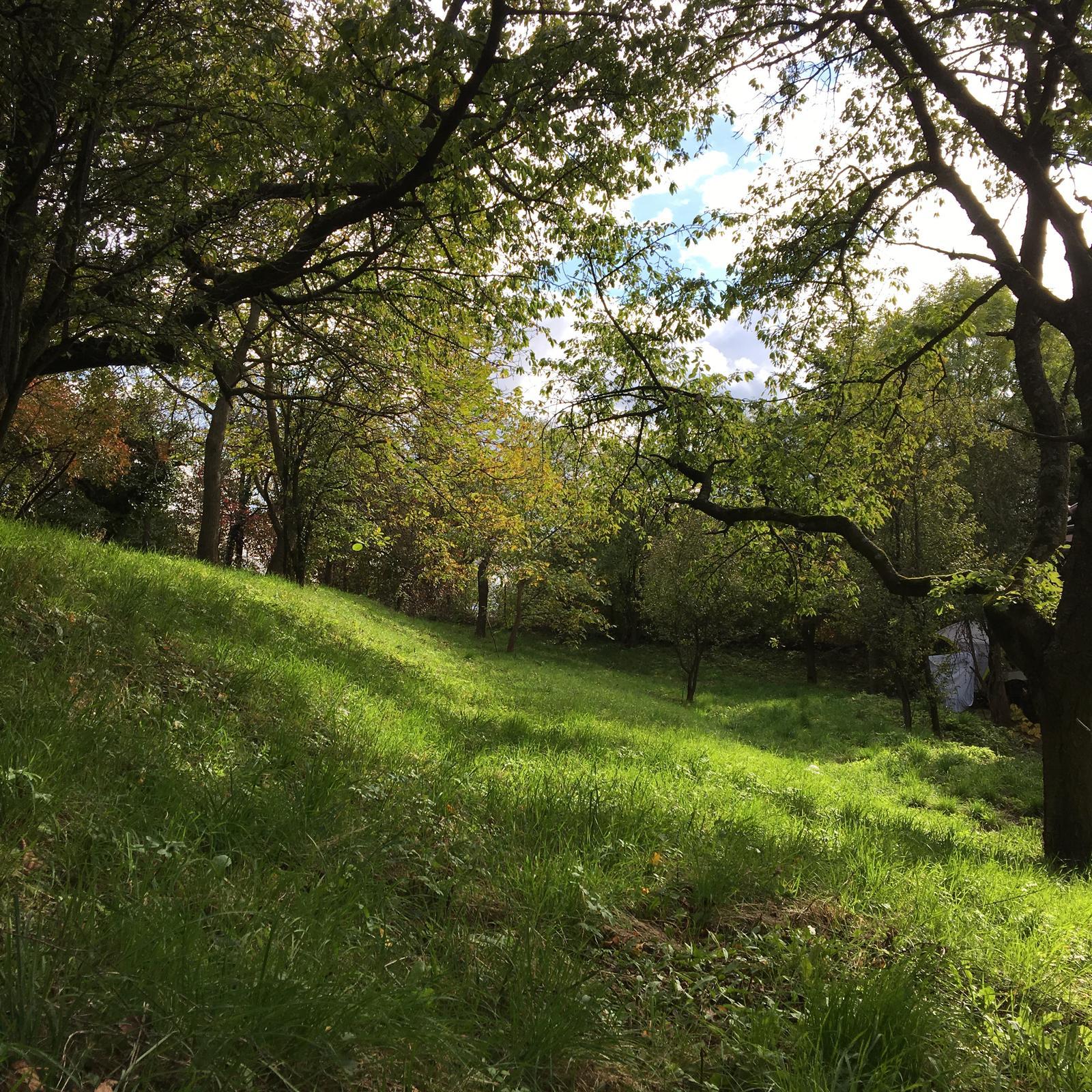 Na samote u lesa - Obrázok č. 305