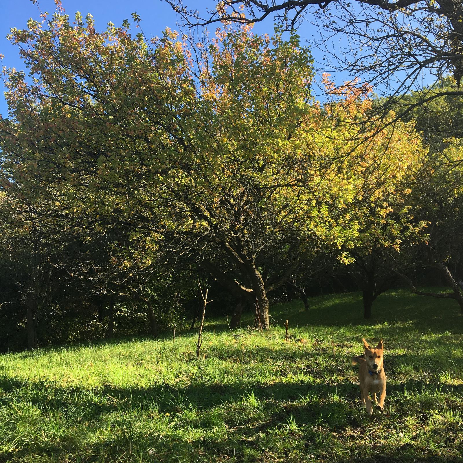 Na samote u lesa - Obrázok č. 306