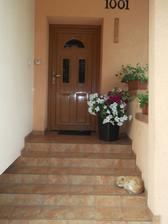 naše kočka  hlídačka