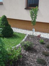 odkvetlé rododendrony i vřesovce.....budu muset zase čekat rok