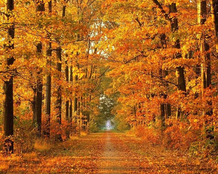 Jesenné čaro - Obrázok č. 33