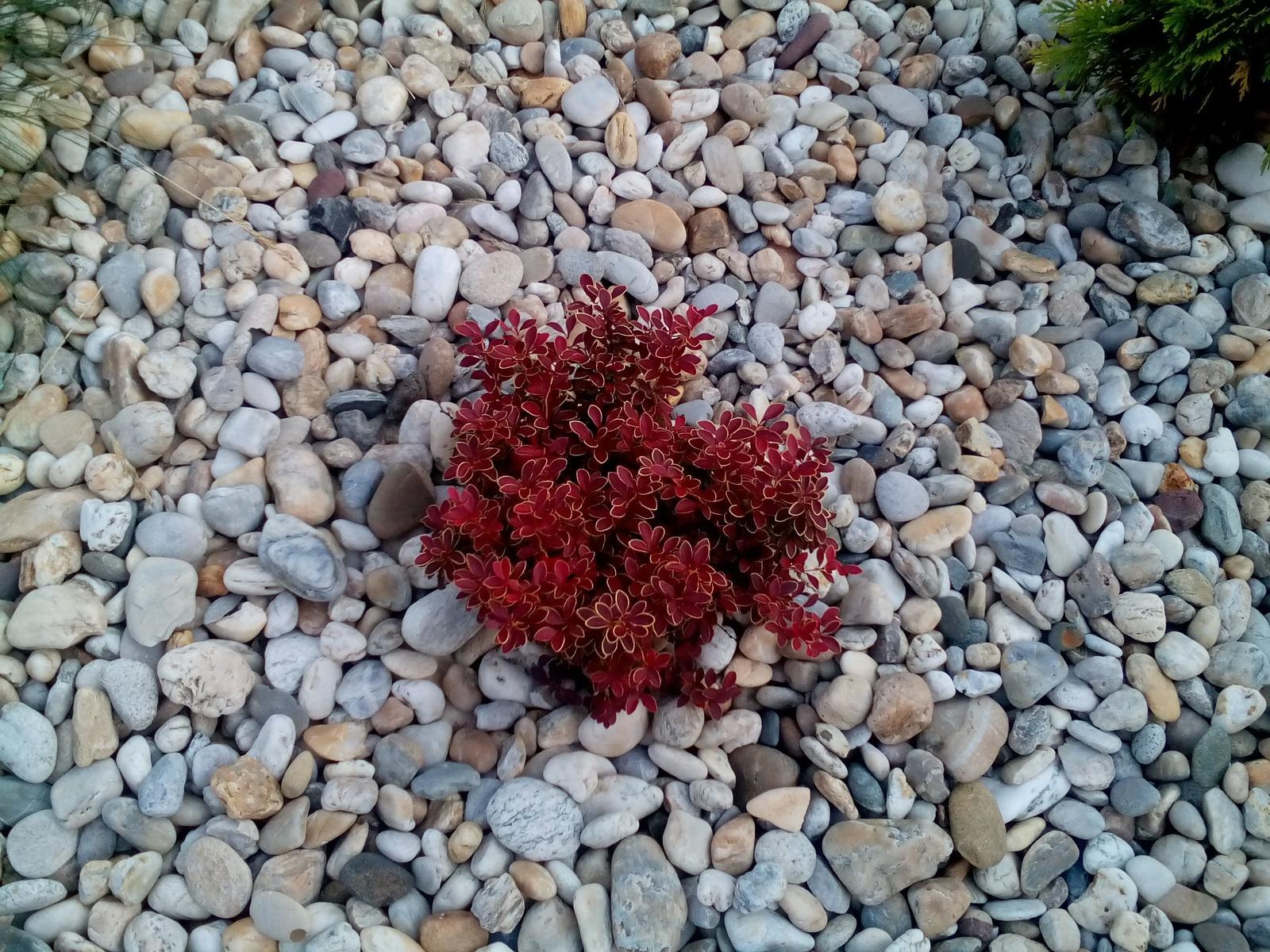 Rastlinky sa rozrastajú.. - Obrázok č. 3