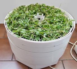 Suší se provensálské bylinky.