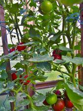Poprvé zkouším hnědé rajče Kumato, kupovali jsme v zimě v Lidlu a moc nám chutnalo.