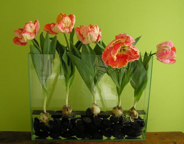 """""""Kvetinkovo"""" - Obrázok č. 10"""