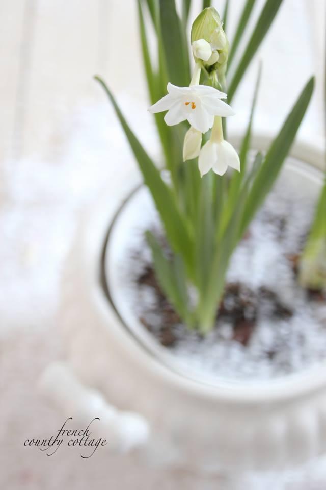 """""""Kvetinkovo"""" - Obrázok č. 47"""