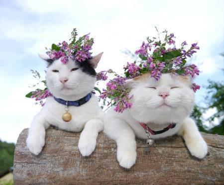 """""""Kvetinkovo"""" - Obrázok č. 79"""