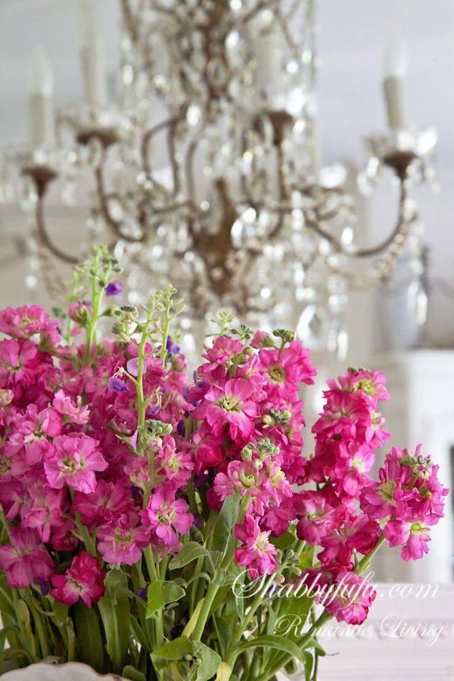 """""""Kvetinkovo"""" - Obrázok č. 91"""