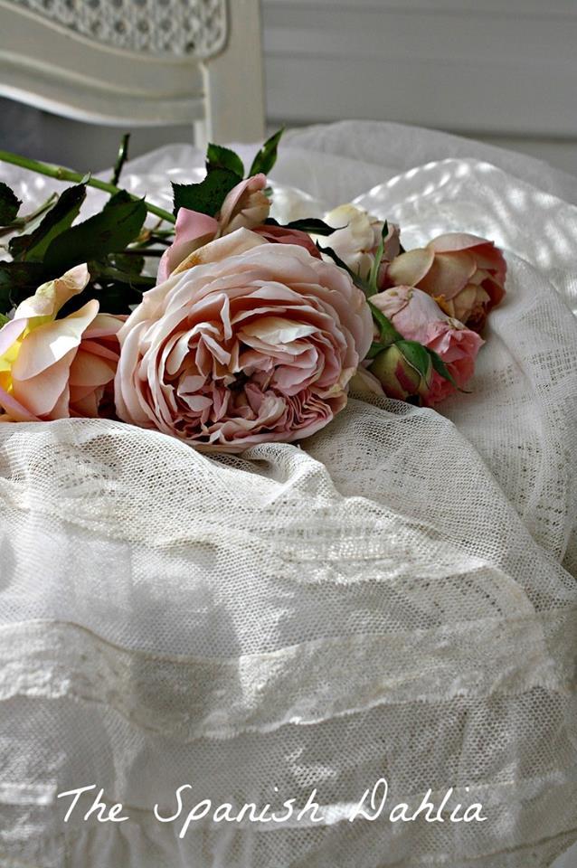 """""""Kvetinkovo"""" - Obrázok č. 95"""