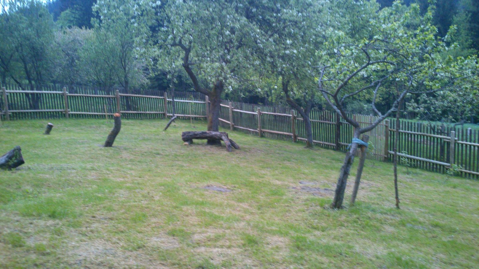Naša drevenička - po stavbe plotu proti jelenom, srnkam, diviakom, jazvecom,(spaciruju sa tu ako na korze) sme začali davat do poriadku zahradu