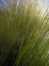 tato trava vo vetre je neuveritelna...