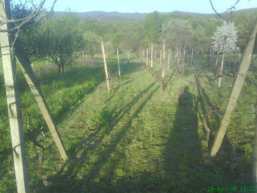 Naš domček - vinohrad