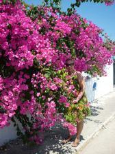 všudypřítomné květinky