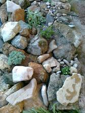 dufam,ze sa mi skalnicky co som dnes kupila pekne rozrastu :-)