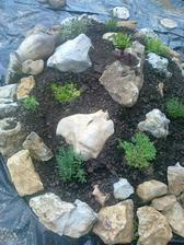zalozila som novu skalku s bylinkami :-)