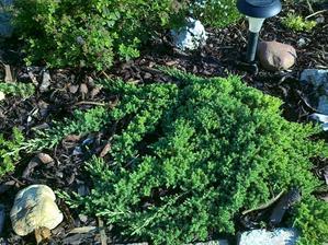 aj tato drevinka uz kusok podrastla:-)