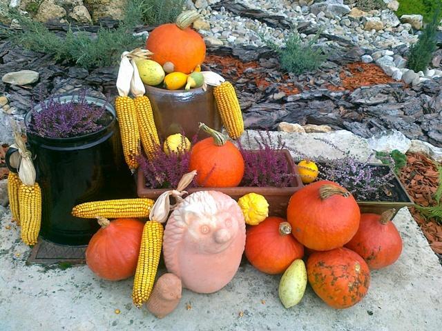 Predna zahradka sa zacina troska rysovat :-)) - jesen zavitala aj do zahradky:-)