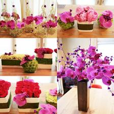 Orchideove:)