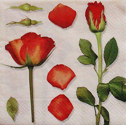 Cervena svatba 8. cervna 2006 - Obrázek č. 31