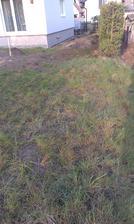 vyhubený trávnik