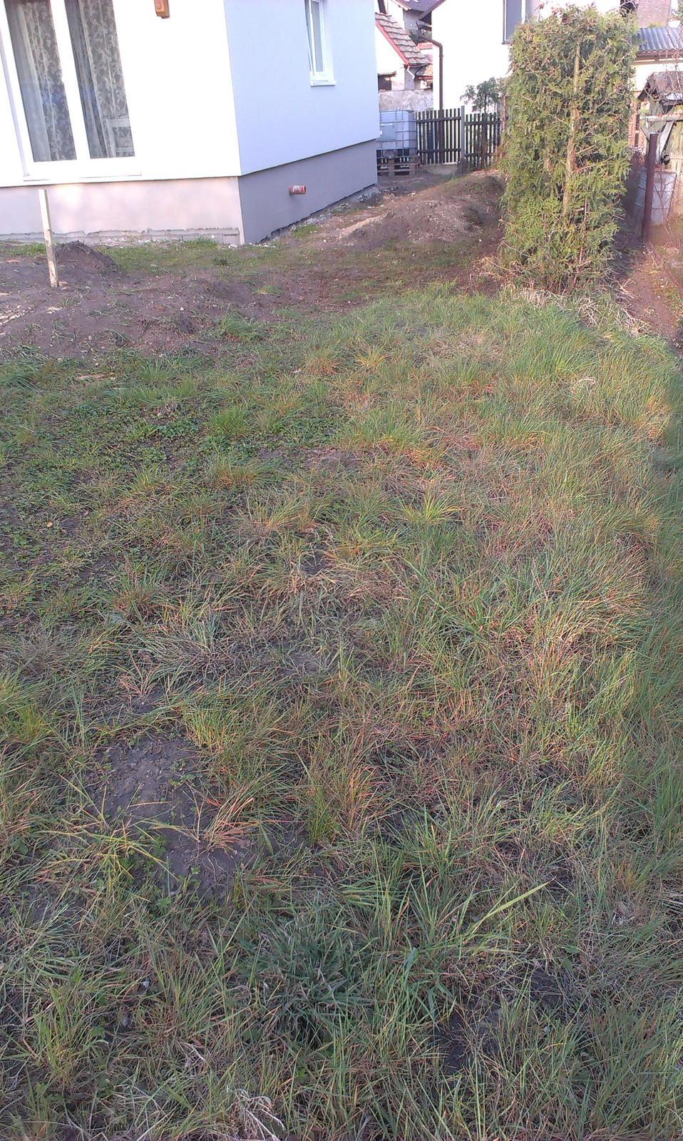 Záhrada - vyhubený trávnik