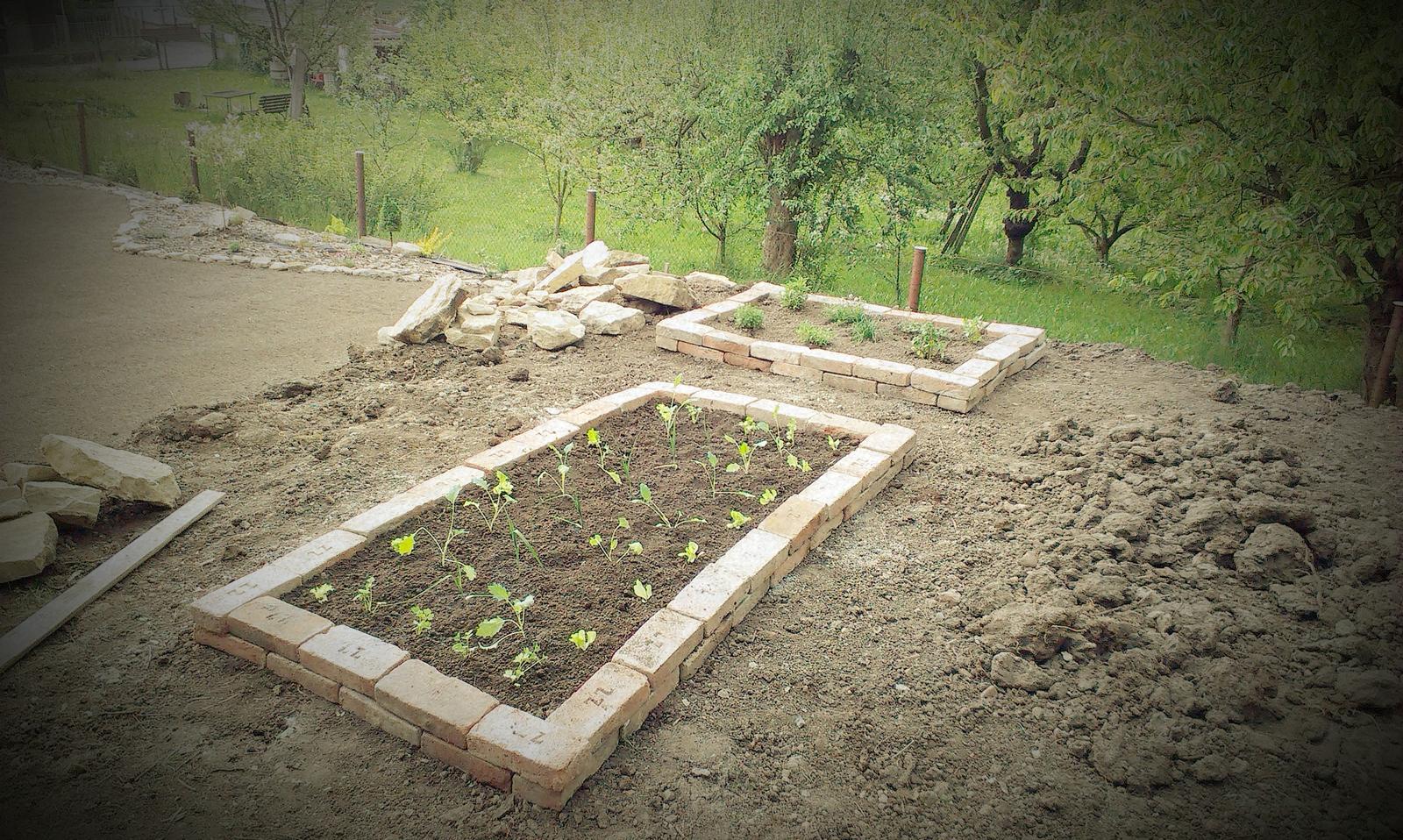 Záhrada - Kým rastie tráva starám sa o tohtoročnú úrodu - prvé priesady a bylinky zasadené