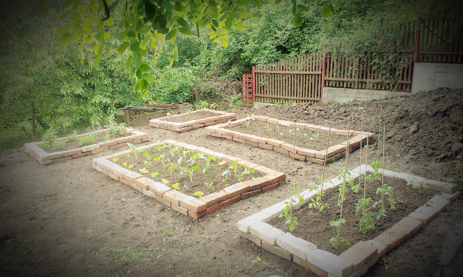 Záhrada - Kým tráva rastie realizujem sa v úžitkovej časti aby sme sa dočkali aj prvej úrody - teda ak nám ju slimáky nezožerú
