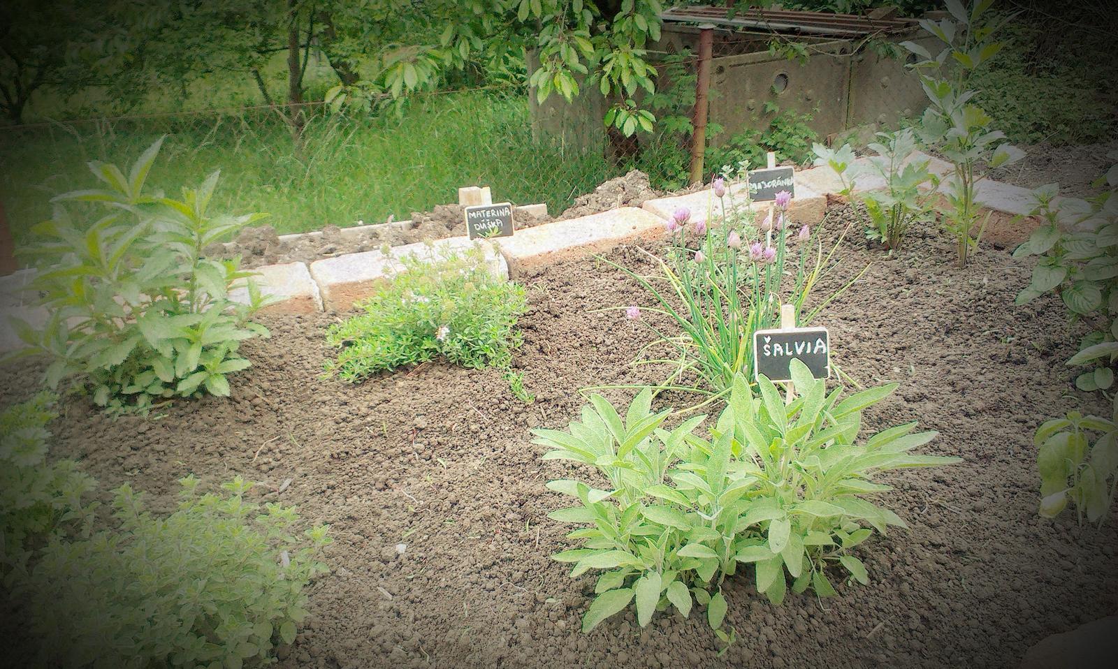 Záhrada - Bylinkáč :-)
