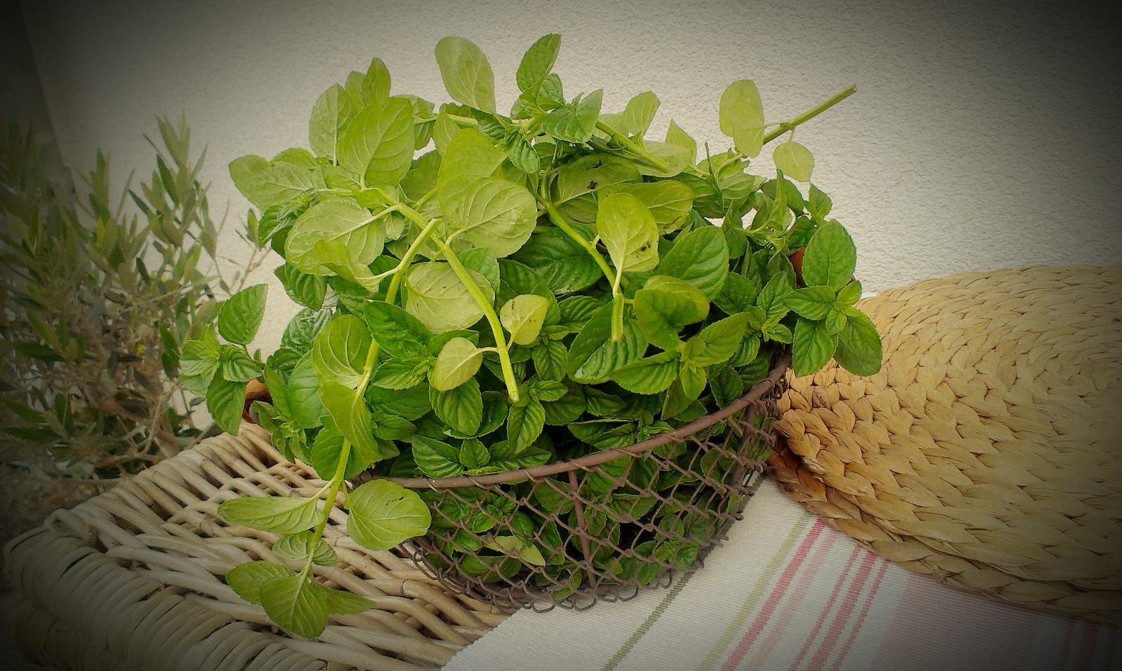 Záhrada - sklizeň - príprava na dlhé zimné večery s teplým čajom