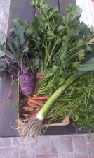 vlastná úroda. Súmarum 1. ročník pestovania: jahody, maliny, šalát, kedluby, mrkva, hrach, pórek, zeler, paradajky, redkvička, petržel, feferónky .... a nerátam bylinky :-)