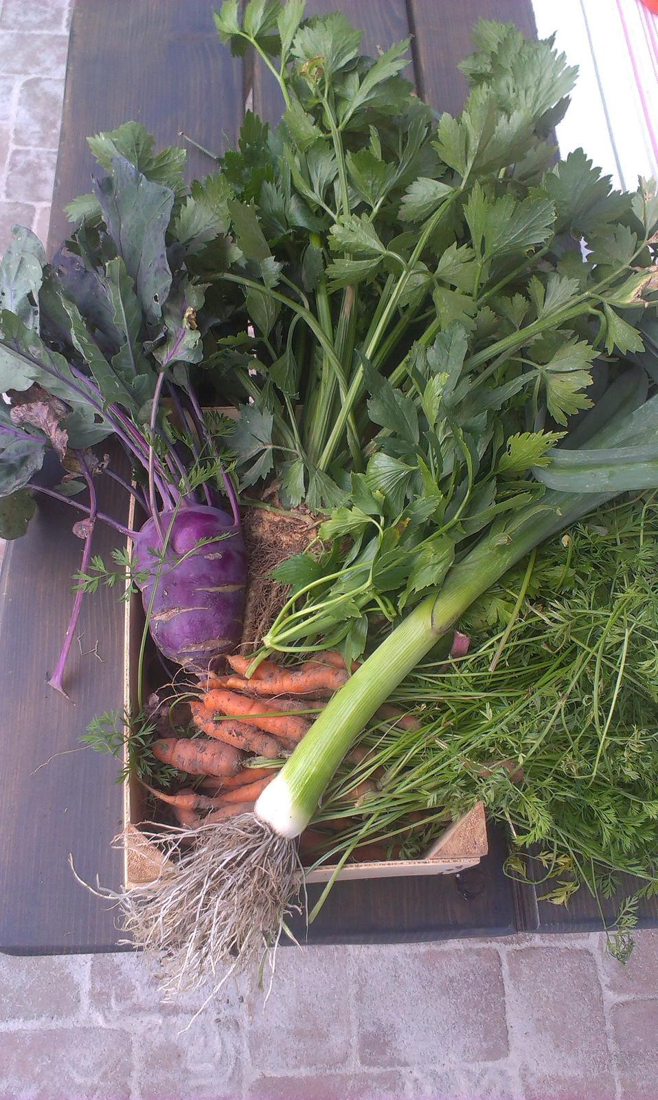 Záhrada - vlastná úroda. Súmarum 1. ročník pestovania: jahody, maliny, šalát, kedluby, mrkva, hrach, pórek, zeler, paradajky, redkvička, petržel, feferónky .... a nerátam bylinky :-)