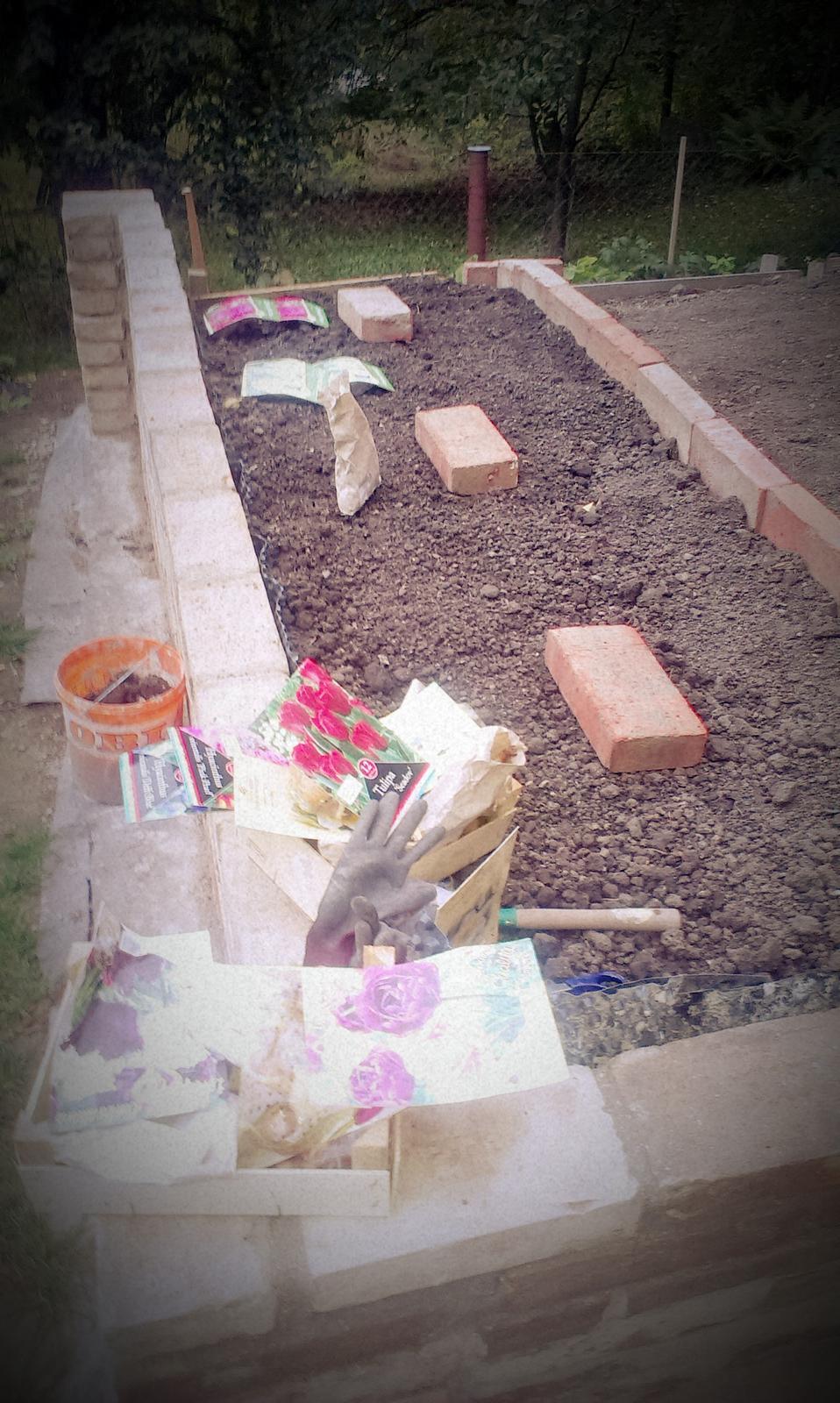 Záhrada - osadzujem - hyacinty, tulipány a narcisy. Tam kde sú tehly budú ruže (ale tie až po výplate :-)))) )Treba si dávkovať radosť postupne :-)