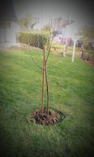 postav dom - MÁME, sploď dieťa - MÁME, zasaď strom - už aj to -  MÁME... :-)