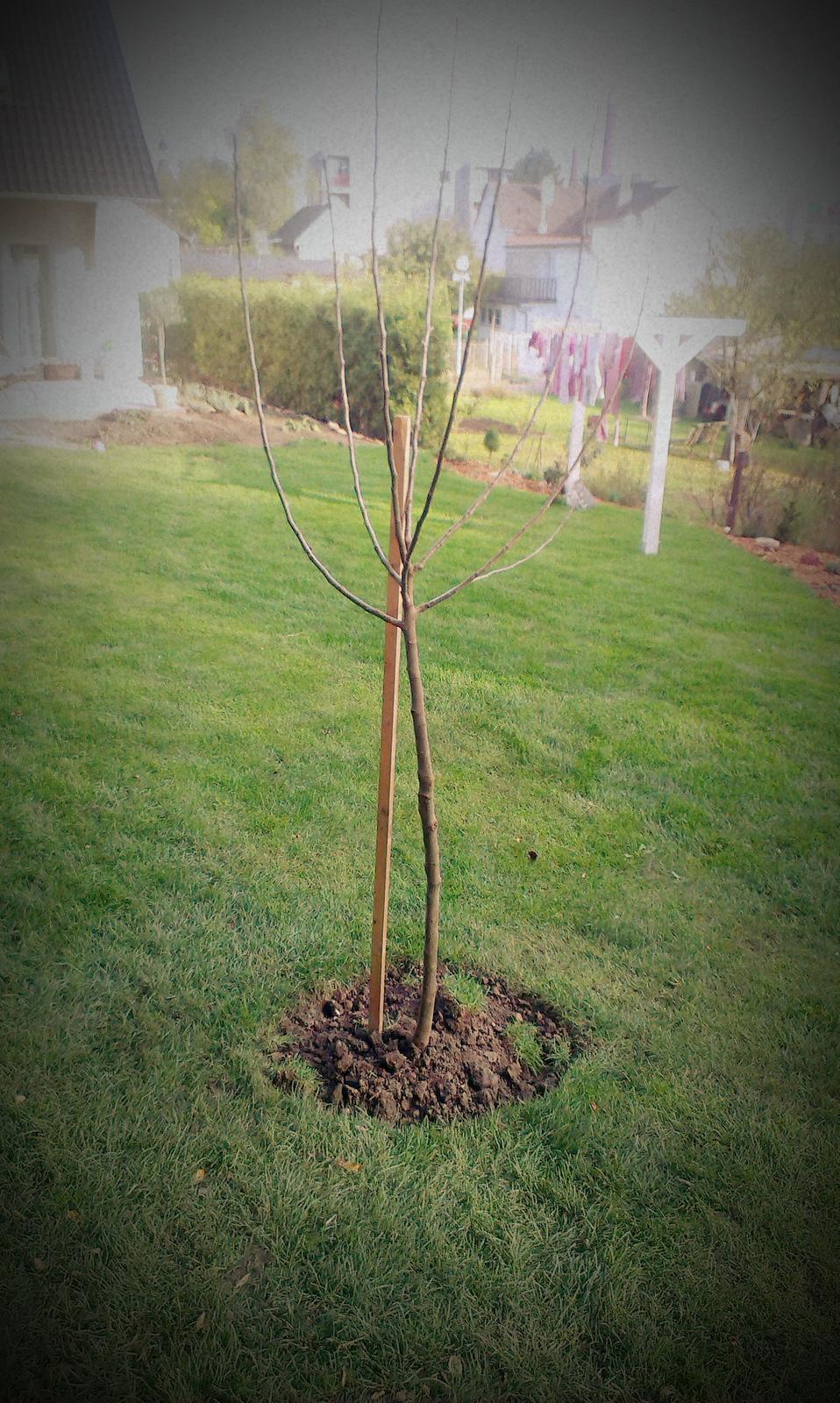 Záhrada - postav dom - MÁME, sploď dieťa - MÁME, zasaď strom - už aj to -  MÁME... :-)