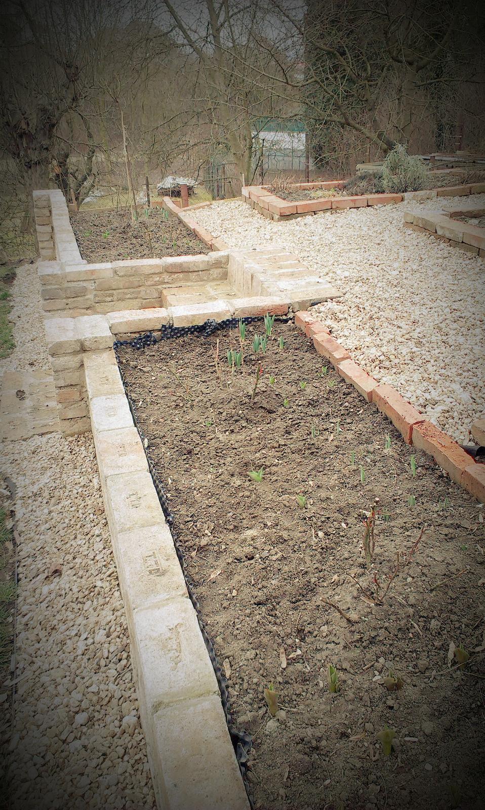 Záhrada - už to lezie - narcisy, tulipány a hyacinty