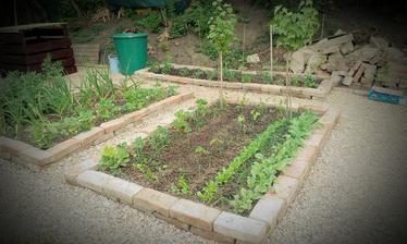 Tak do záhrady už nič nevojde, do posledného miesta všetky hriadky a voľné rohy obsadené!