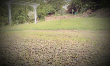 Prvý týždeň za nami a už sa to začína zelenať