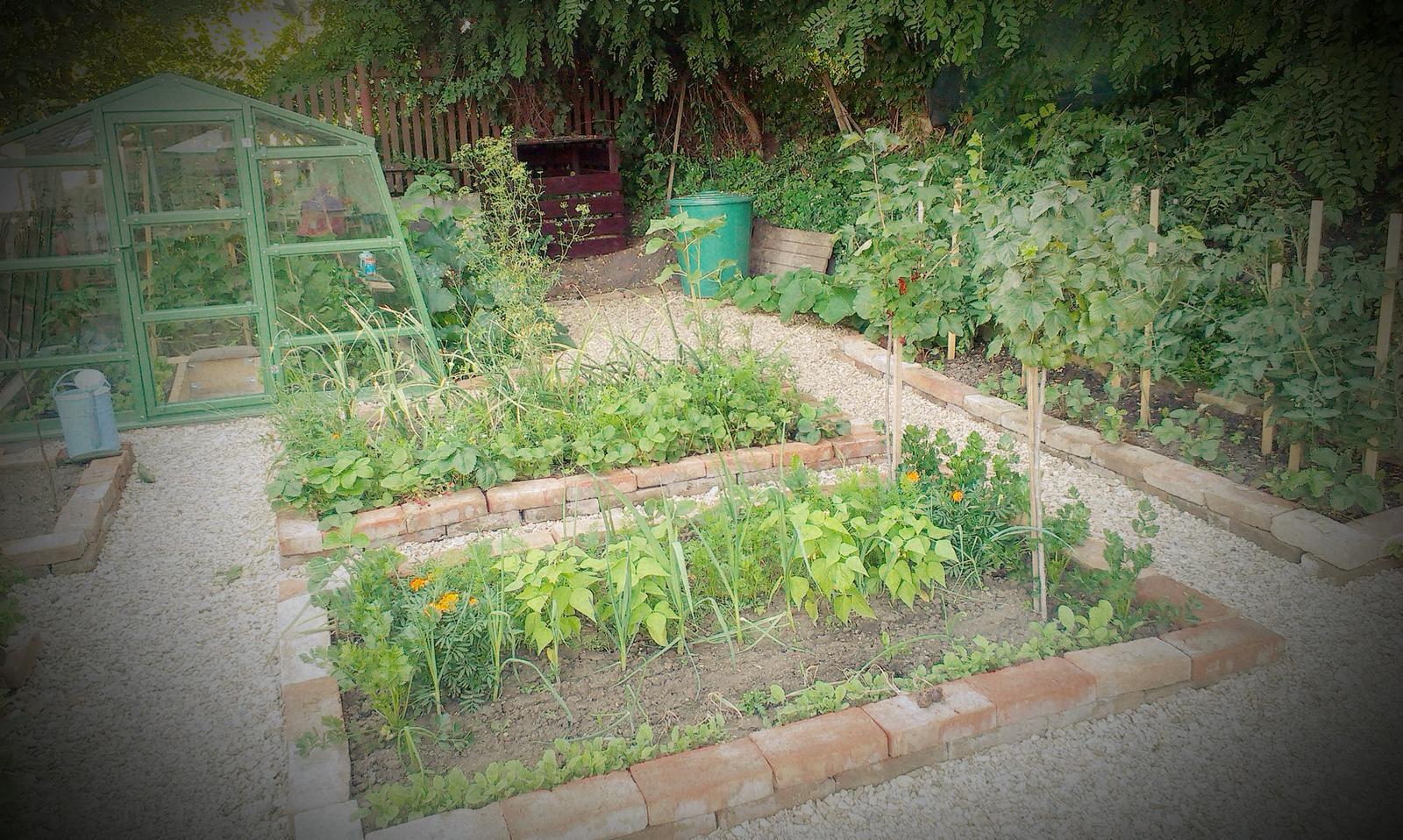 Záhrada - Záhrada v plnej polnej :-)