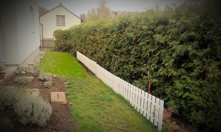 Starý trávnik a nová časť, zasadený 5 růží na kmínku a na konci popínavá ku ktorej na jar pribudne oblouk po ktorom ju chcem ťahať. Ešte dokončiť plot, zasypať okrasným kačírkom štrk a na tento rok je hotovo!