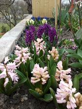 7 farieb hyacintov
