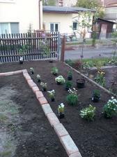 základné rozmiestnenie hotové - a možem začať sadiť
