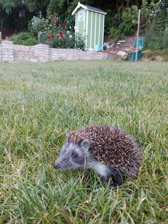 Nový záhradný spolubývajúci - teda jedno zo 4 miminek