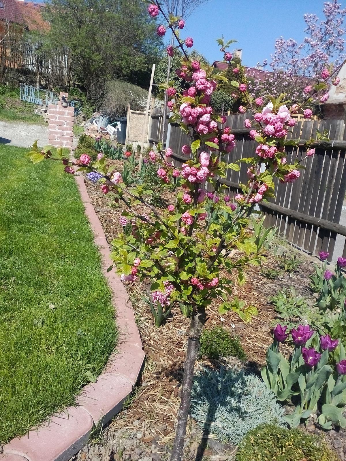 Záhrada - Obrázek č. 209